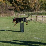 Tävling 20121028174